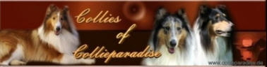 Collies_of_Collieparadise